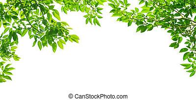 パノラマである, 葉, 白, 緑, bac