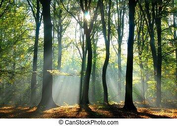 ビーム, によって, 木, 注ぎなさい, ライト
