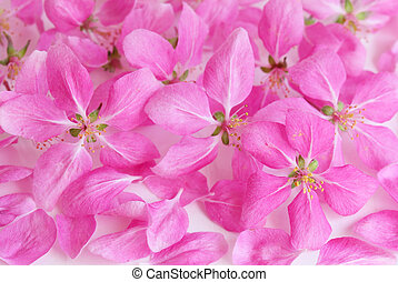 ピンク, さくらんぼ, 花, 背景