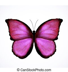 ピンク, 蝶, 明るい, ベクトル, isolated.