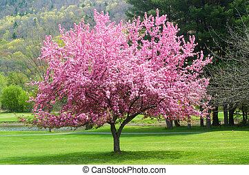 ピンク, flowering 木