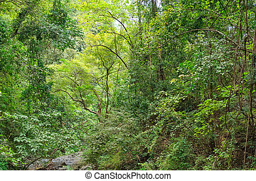 フィリピン。, 島, 野生, panay, 森林