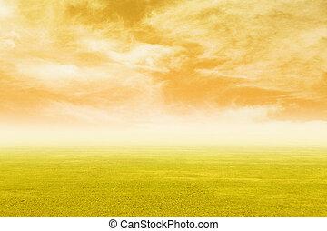 フィールド草, 空, 日没
