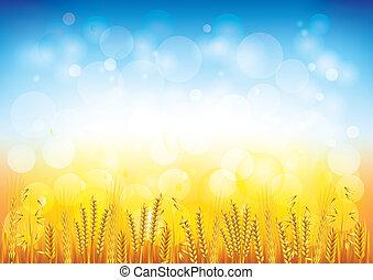 フィールド, ベクトル, 小麦, 背景