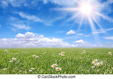 フィールド, 春, 日当たりが良い, 落ち着いた, 牧草地