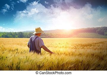 フィールド, 歩くこと, 小麦, によって, 農夫
