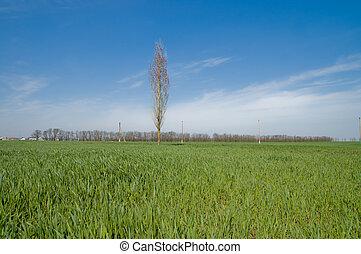 フィールド, 緑, 春