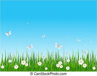フィールド, 草が茂った, 蝶