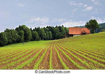 フィールド, 農業