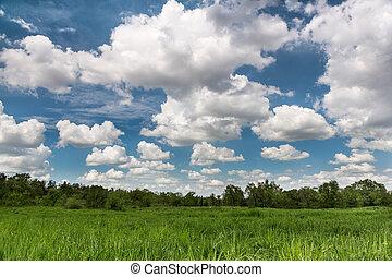 フィールド, 風景, 緑, cloudscape