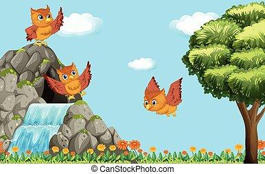 フクロウ, 上に, 飛行, 3, 滝