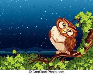 フクロウ, 夜
