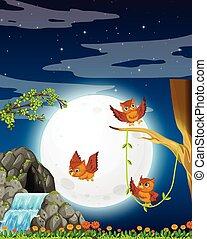 フクロウ, 夜, 自然