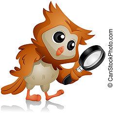 フクロウ, 捜索しなさい