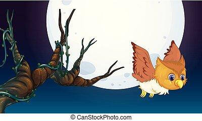 フクロウ, 探求, 夜