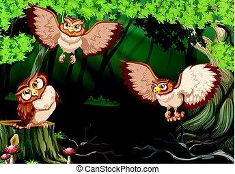 フクロウ, 飛行, 森林, 3