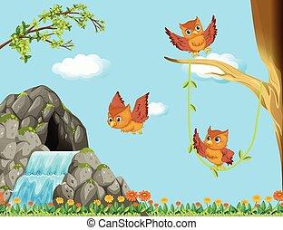フクロウ, 飛行, 3, 滝