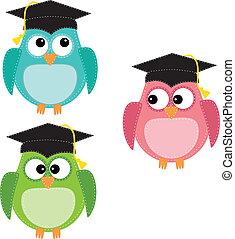フクロウ, 3, 卒業の帽子