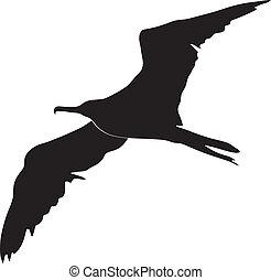 フリゲート艦の鳥