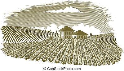 ブドウ園, 木版, 風景