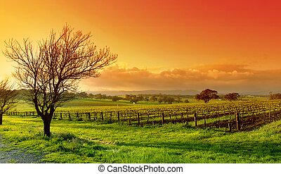 ブドウ園, 風景