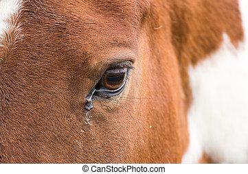 ブラウン, の上, 目, 馬, 終わり