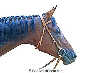 ブラウン, 頭, horse.