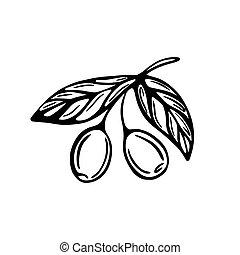ブランチ, hand-drawn, セット, イラスト, オリーブ, バックグラウンド。, 隔離された, いたずら書き, スタイル, 白, ベクトル