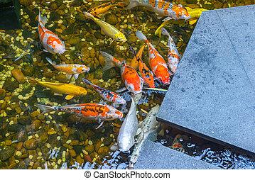 プール, 美しい, 庭, koi, 日本語, fish