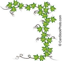 ベクトル, イラスト, ivy., 緑