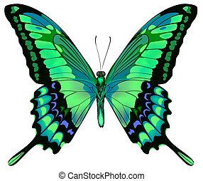 ベクトル, 背景, 蝶, 美しい, 隔離された, 白, 青緑, イラスト