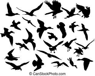 ベクトル, 飛行, 鳥