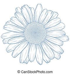 ベクトル, daisy.