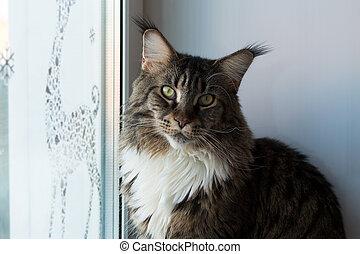 ペット, 家, 窓, 猫の世話