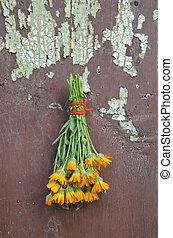 マリーゴールド, 古い, 壁, ハーブ, 医学, calendula, 新鮮な花, 束