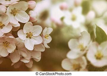 リンゴの花, 型, 色, クローズアップ, フィルター, 花