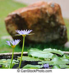 ロータス, 花, 公共公園