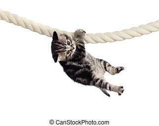 ロープ, 面白い, 掛かること, 赤ん坊, ねこ