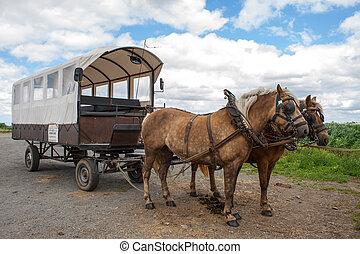 ワゴン, 馬, flemish, フィールド, によって, カバーされた