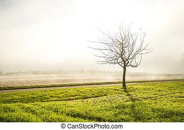 上に, 霧, フィールド, 木, はげ, 秋