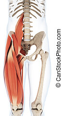 上部, 足, musculature