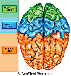 上, 人間の頭脳, 光景