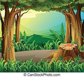 不法入国者, 伐採, 森林