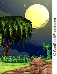 中央, 光景, 森林, 夜