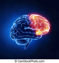丸い突出部, 正面, -, 脳, 人間, x 線, 光景