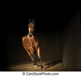 乗馬, アラビアの馬, ホール, 湾, 訓練
