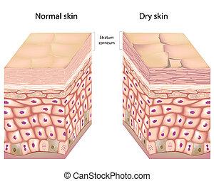 乾きなさい, 皮膚, eps8