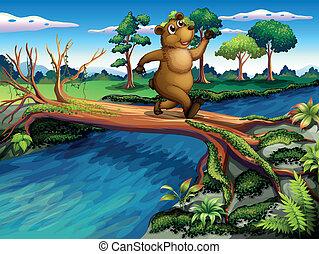 交差, 間, 川, 動くこと, 熊