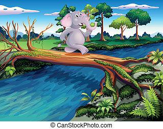 交雑ブリッジ, 木, 象