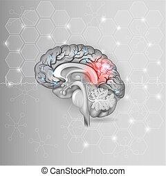 人間, 正常, ライト, 抽象的, 灰色, 脳, 背景, cardiogram, 六角形, 赤